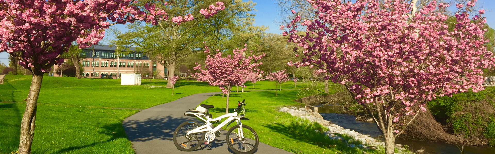 A bike with cherry bloosom trees along the Schuylkill River Trail