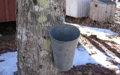 Maple Sugar Magic in Berks County, PA