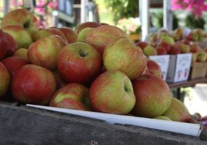 Beautiful Honeycrisp apples sit on a stand at the Leesport Farmers Market