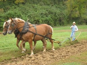 Two Horses pull a till plough while a farmer in overalls walks behind and guides them.